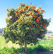 Owoce Boże